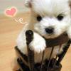 Promeni mi avatar - Page 4 515077wuwznzvn0u